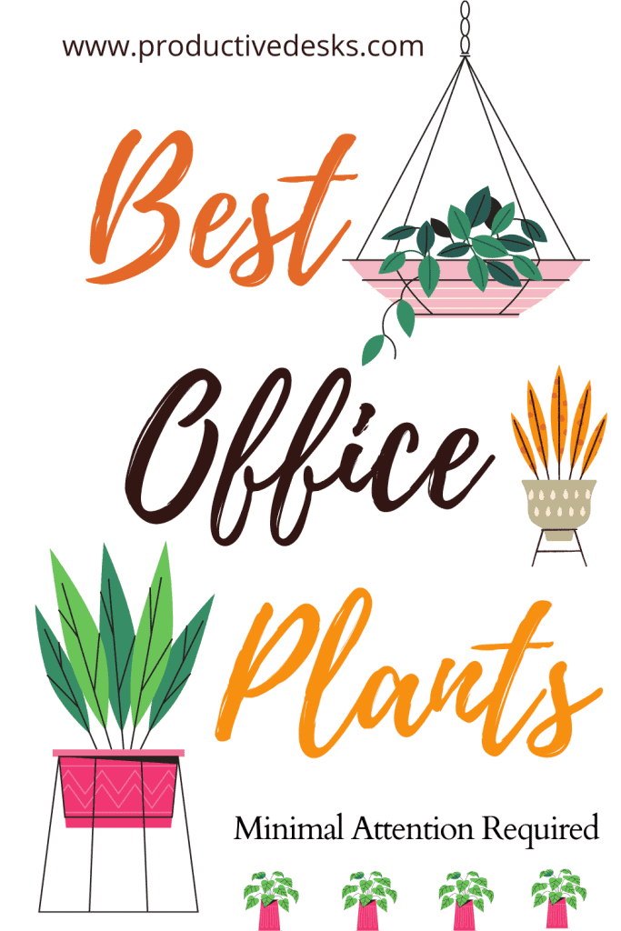 Best Office Plants For Desk That Require Minimal Attention