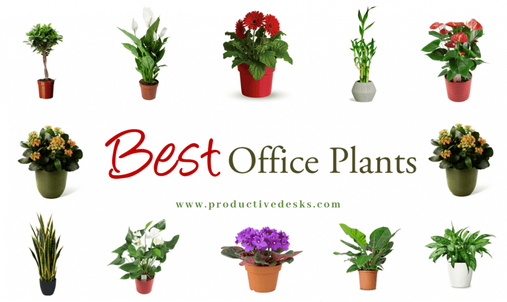 Best office plants for desk